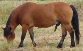 häst kuk avsugning bilder